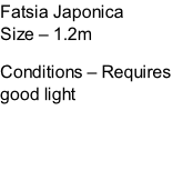 Fatsia Japonica Size – 1.2m  Conditions – Requires good light