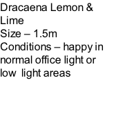 Dracaena Lemon & Lime Size – 1.5m  Conditions – happy in normal office light or low  light areas