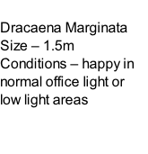 Dracaena Marginata Size – 1.5m  Conditions – happy in normal office light or low light areas