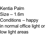 Kentia Palm Size – 1.6m Conditions – happy  in normal office light or low light areas